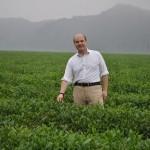 Green Boar Organic Tea031